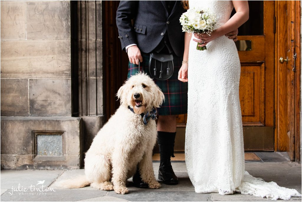 Labradoodle at a wedding