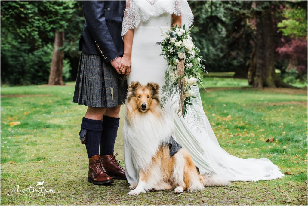 Rough Collie posing with bride and groom